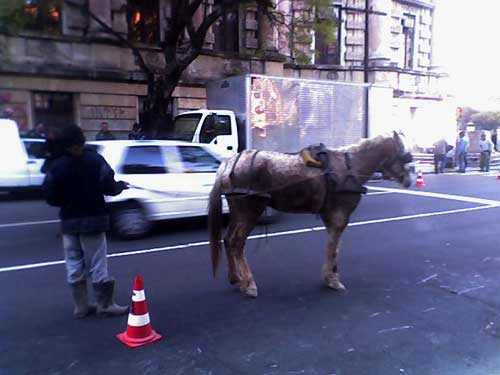 cavalo1.jpg
