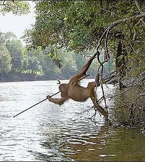orangotango.jpg