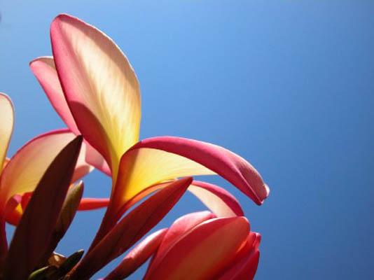magnoliashot.jpg